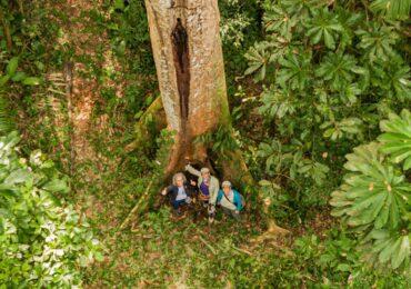 ONG ARBIO Perú celebra 11 años conservando los bosques en la Amazonía